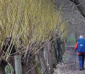 Boekrecensie: Bomen over de weg naar Santiago – Ignace de Haes